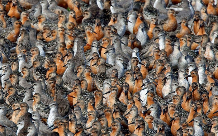 Огромные колонии животных