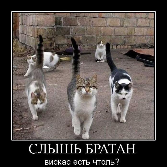 5680197_249Slyshbratan (697x700, 116Kb)