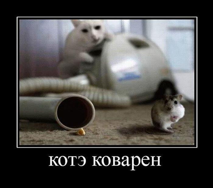 5680197_930Kovarnyjkot (700x616, 46Kb)