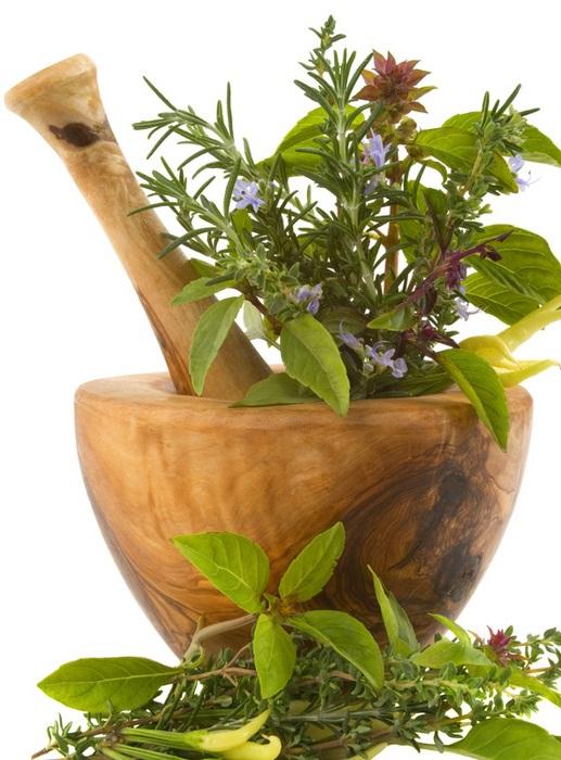 herbs (517x700, 342Kb)