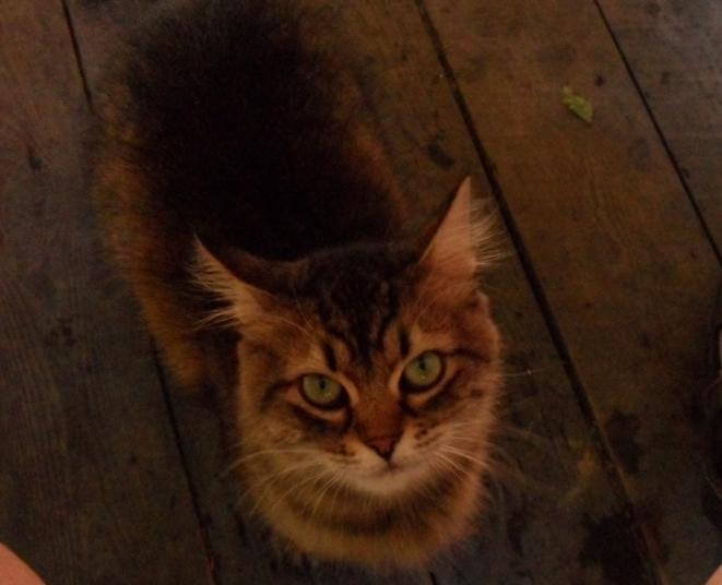 кошка требует своё (661x536, 713Kb)