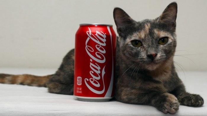 кошка пиксель породы манчкин фото 2 (700x393, 79Kb)