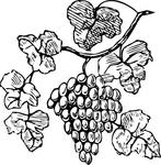 Превью grapes-clip-art_f (417x425, 142Kb)