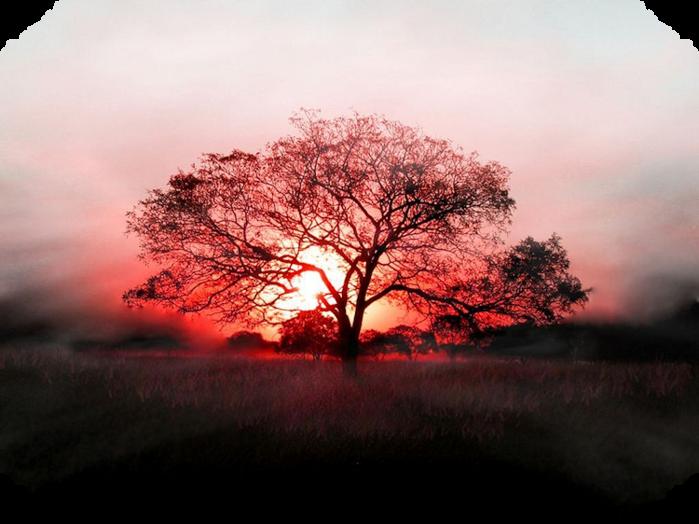 red-tree-wallpaper (700x524, 526Kb)