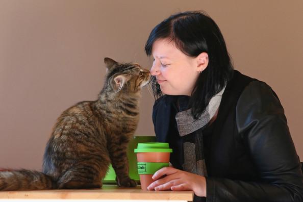 кошачье кафе в мельбурне 1 (594x396, 137Kb)