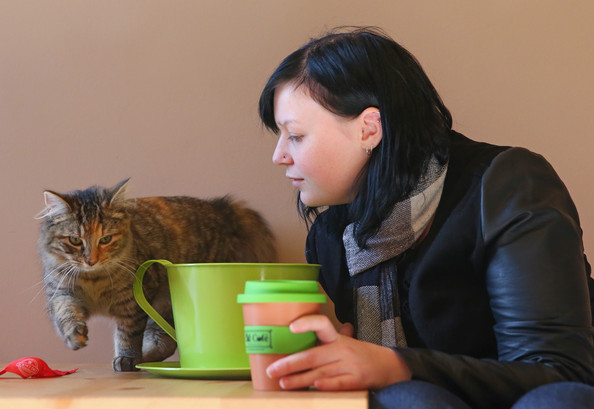 кошачье кафе в мельбурне 3 (594x409, 148Kb)