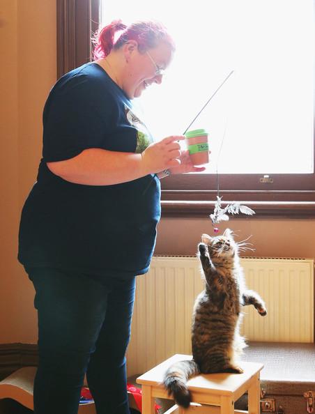 кошачье кафе в мельбурне 6 (452x594, 161Kb)