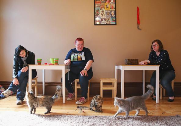 кошачье кафе в мельбурне 8 (594x414, 191Kb)