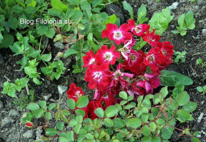 3241858_flowers311 (700x482, 95Kb)