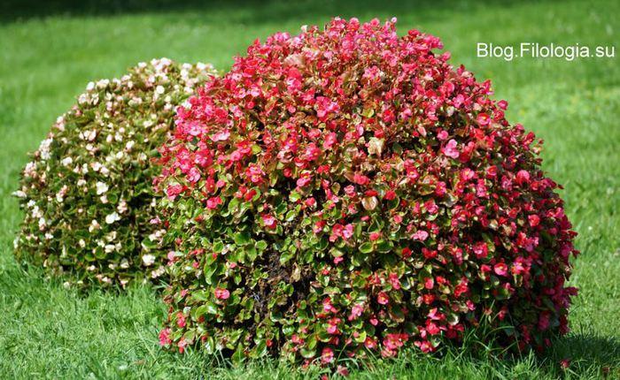 3241858_flowers354 (700x430, 98Kb)
