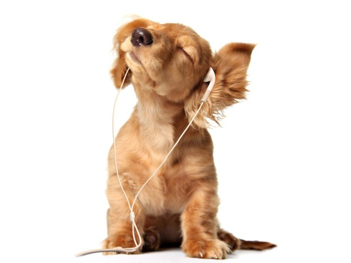 Young Puppy listening to music on head phones Wallpaper__yvt2 (700x525, 36Kb)