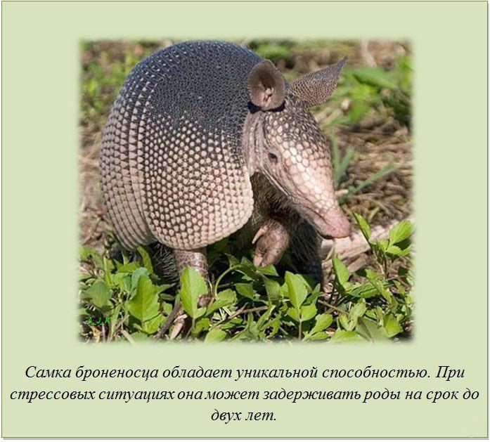 http://img1.liveinternet.ru/images/attach/c/11/115/285/115285151_1.jpg