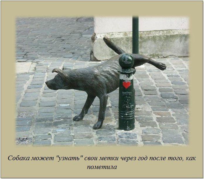 http://img1.liveinternet.ru/images/attach/c/11/115/285/115285163_13.jpg