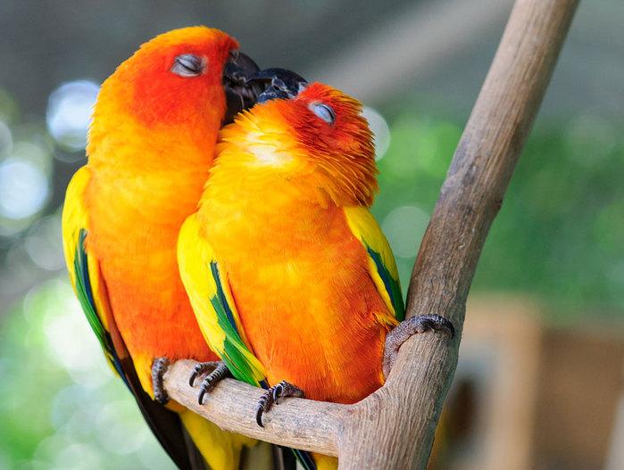 3085196_animal_kiss_01 (700x527, 86Kb)