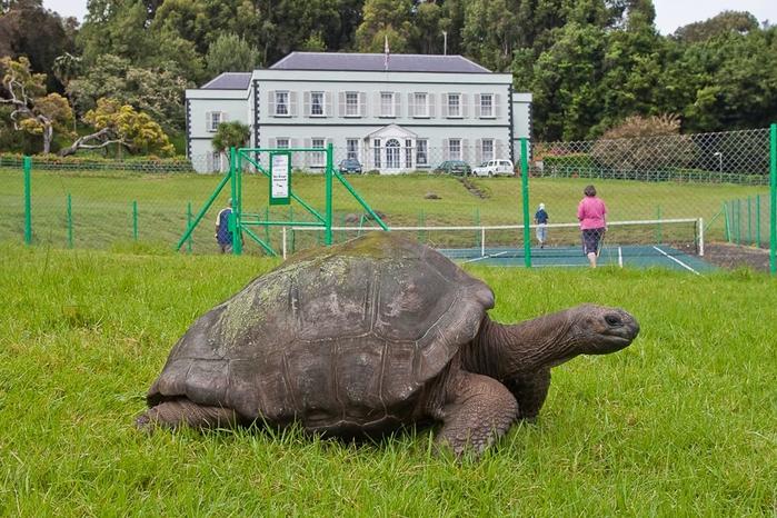 черепаха джонотан фото 1 (700x466, 327Kb)