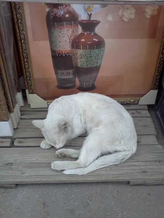 белый кот (525x700, 433Kb)