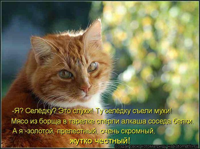 kotomatritsa_7Ik (700x524, 407Kb)