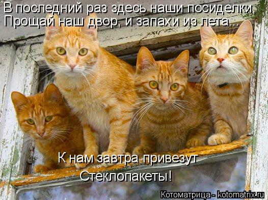 kotomatritsa_B (526x393, 250Kb)