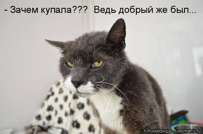 kotomatritsa_Cb (700x464, 170Kb)