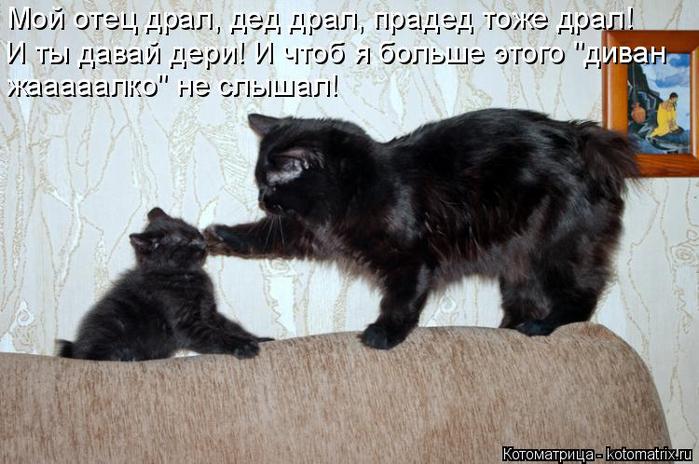 kotomatritsa_KZ (700x464, 322Kb)