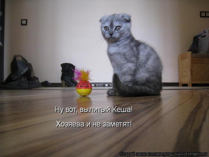 kotomatritsa_s (700x524, 240Kb)