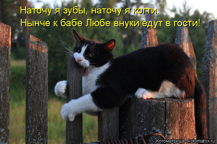 kotomatritsa_X (700x466, 359Kb)