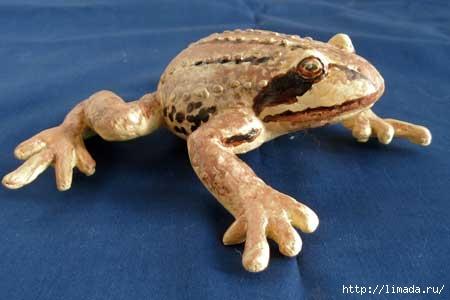 frog1 (450x300, 60Kb)