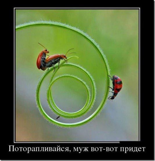 5680197_499Potoraplivajsya (534x555, 40Kb)