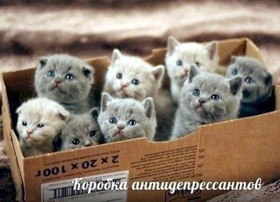 котята (550x396, 178Kb)