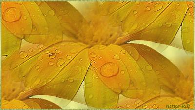 Желтые-цветы-в-росе (400x225, 193Kb)