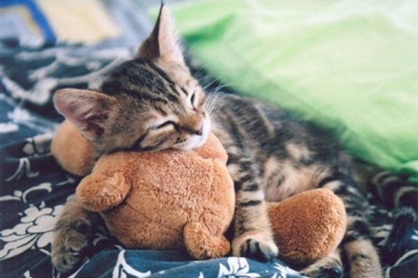 котик  на  медвежонке спит (600x399, 68Kb)