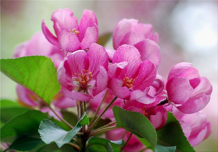 still_life_in_flowers_35 (700x489, 80Kb)