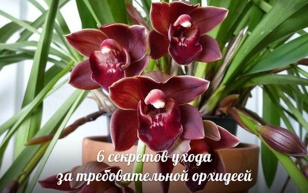 3256587_yhod_za_orhideei_1_ (604x380, 62Kb)