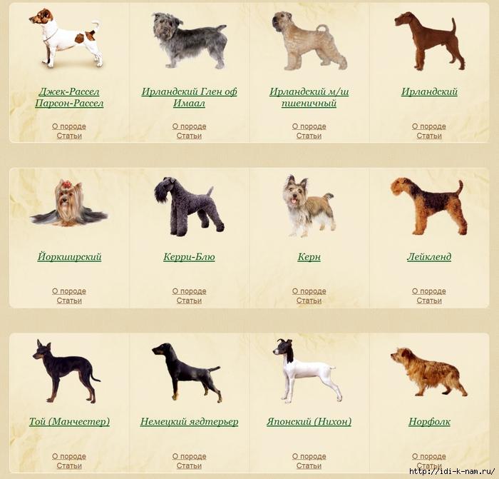 фото всех пород собак с картинками