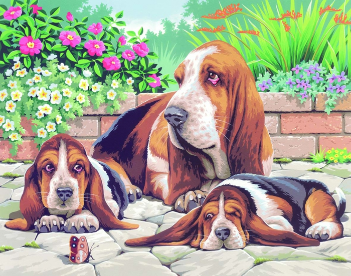 3496842_0044_Basset_Hounds (700x551, 370Kb)