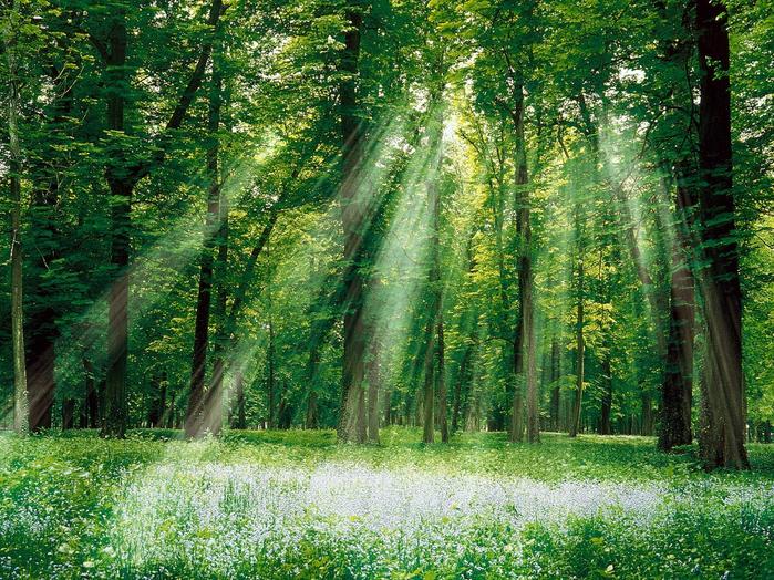 лето.magical_forest291525 (700x524, 682Kb)