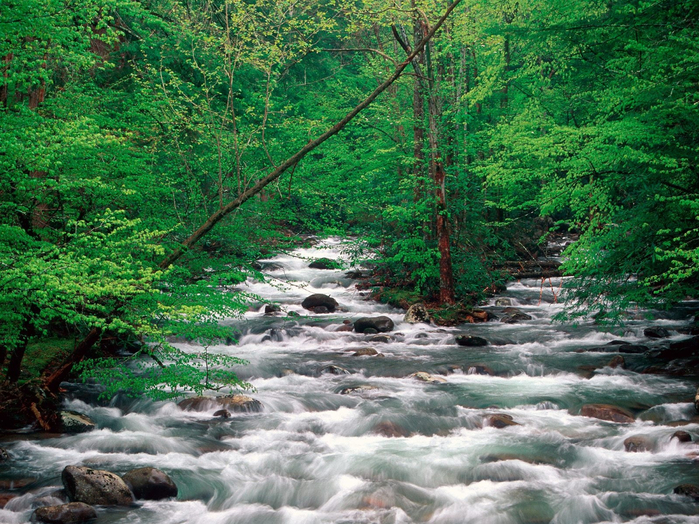 лето..little_pigeon_river__great_smoky_mountains__tennessee7060521 (700x524, 602Kb)