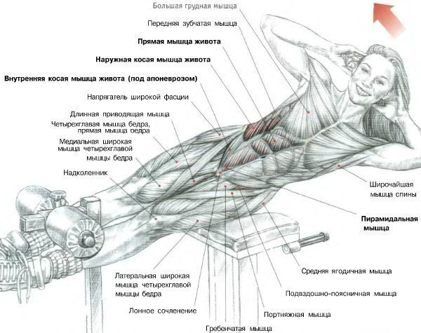 Как быстро накачать грудь дома, упражнения для грудных мышц.
