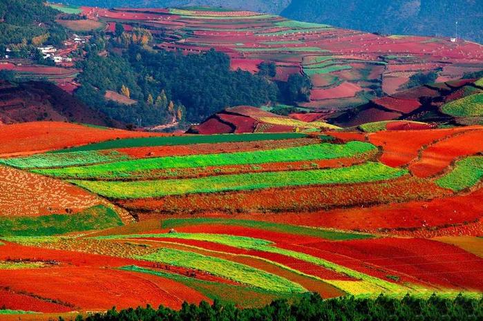 поля Дончуань китай фото 10 (700x465, 498Kb)