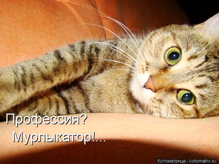 КОТОМАТРИЦА!!!!улыбнём???)))))))