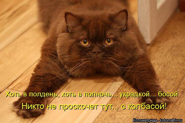 kotomatritsa_O5 (700x465, 330Kb)