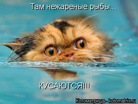 kotomatritsa_U (468x351, 147Kb)
