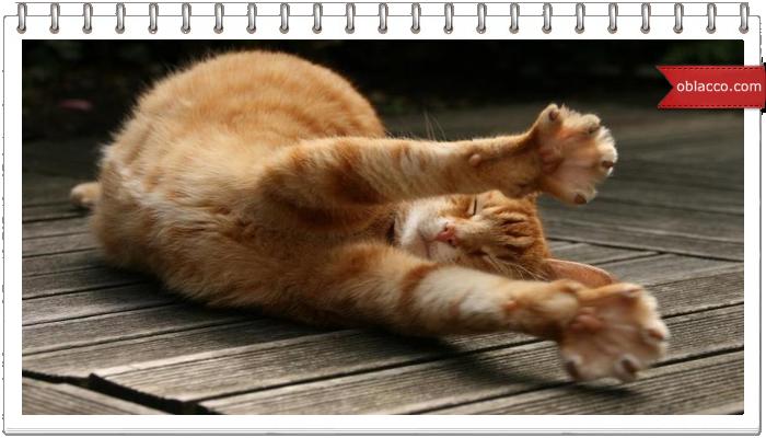 кошки картинки юмор