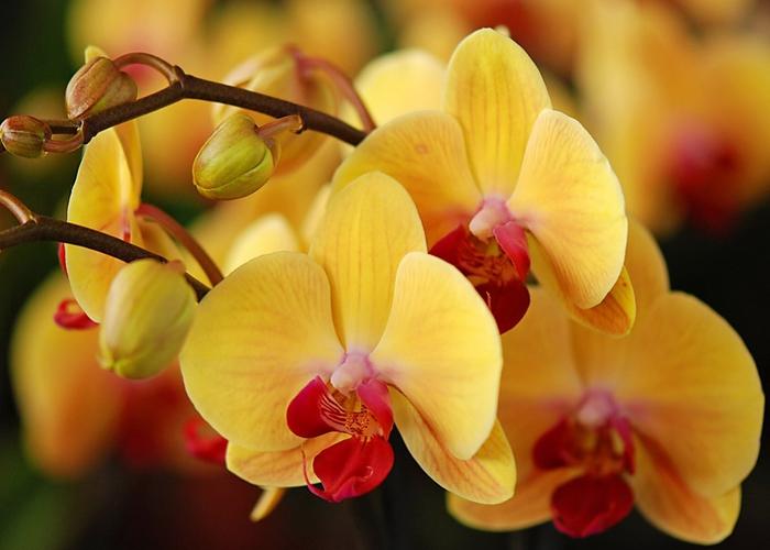 3085196_Orchids_08 (700x500, 209Kb)