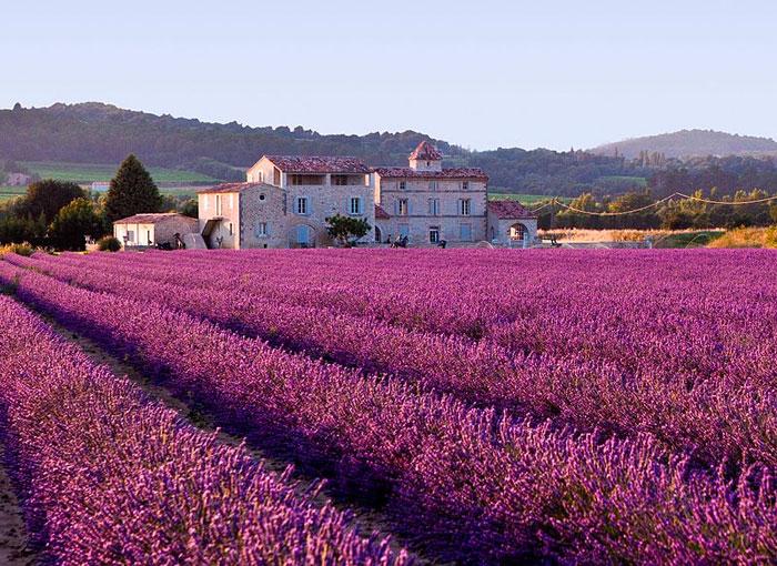 75_Lavender_1 (700x510, 423Kb)