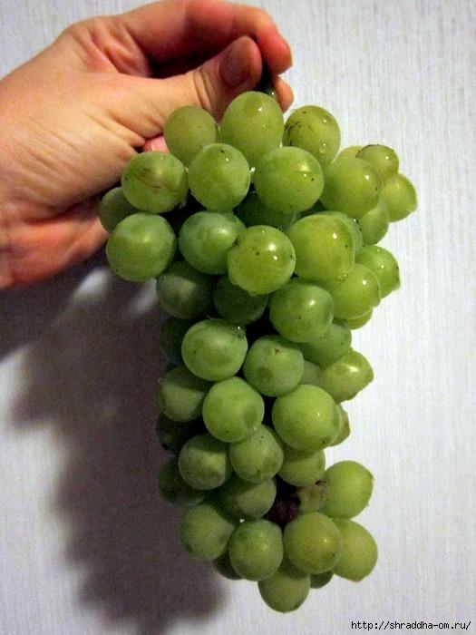 дачный виноград (525x700, 229Kb)