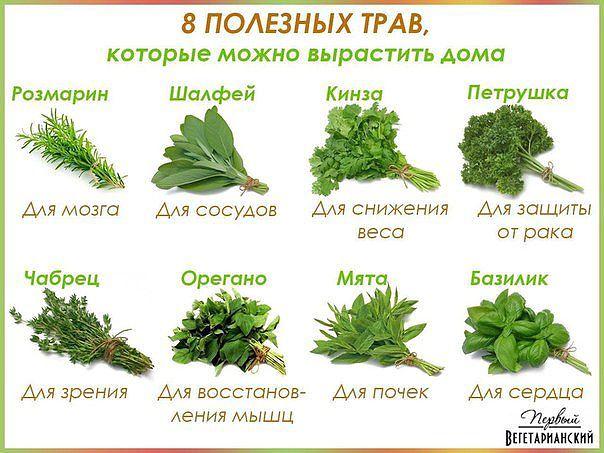 какие травы можно вырастить дома, какую столовую зелень можно вырастить дома,/4682845_imageCAO6AXWW (604x453, 59Kb)
