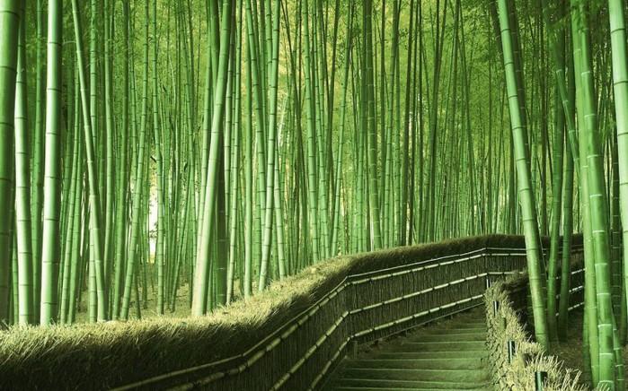 лес (700x436, 127Kb)