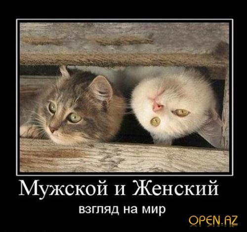 5320643_1286430534_osn (500x468, 36Kb)