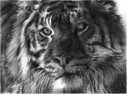 фото и черно-белый рисунок карандашом ...: www.liveinternet.ru/users/5031314/rubric/4015064